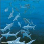 www.noame.co.il joni 7
